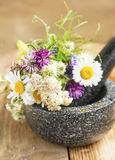 Medicinal Plants and Herbs in a Mortar with Pestle, Alternative Stock Photography