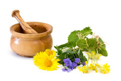 Medicinal plants with mortar and pestle Stock Image