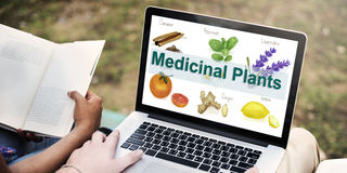 Medicinal Plants Natural Cure Herb Herbalism Concept Stock Photography