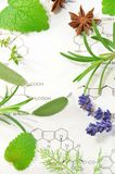 Medicinal plants Royalty Free Stock Photo