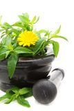 Medicinal plants in a stone mortar. Royalty Free Stock Images