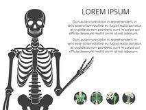 Medicinal poster or banner with human skeletone and bones vector illustration