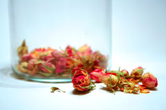 MEDICINAL ROSES Royalty Free Stock Images