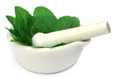 Medicinal tulsi with mortar and pestle Royalty Free Stock Photography