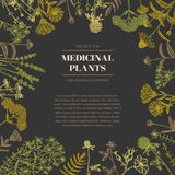 medicinal växter vektor illustrationer