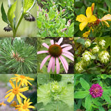 medicinal växter Arkivbild