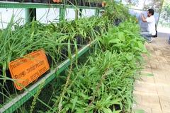 medicinal växter Royaltyfri Bild