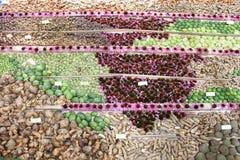 medicinal växter Royaltyfria Bilder