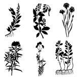 medicinal växter stock illustrationer
