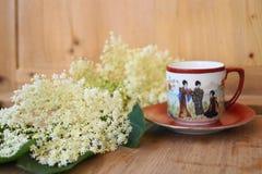 Medicinalväxt - elderflower Royaltyfria Bilder
