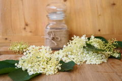 Medicinalväxt - elderflower Arkivfoton
