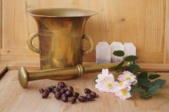 Medicinalväxter - äppelros Royaltyfria Foton