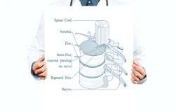 Medicine. Doctor and  anatomical spine. Royalty Free Stock Image