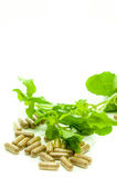 Medicine capsule herb. Royalty Free Stock Photos