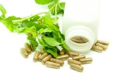 Medicine capsule herb. Stock Image