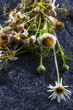 Medicine Chamomile flowers Royalty Free Stock Photos