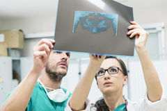 Medicine dentist showing something to her male colleague on x-ra Stock Photo
