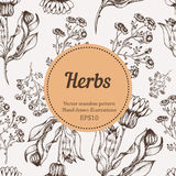 Medicine herb vector seamless nature pattern. Hand drawing sketch illustration Royalty Free Stock Photos