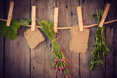 Medicine herbs and paper attach to rope with clothes pins Royalty Free Stock Photography