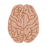 Medicine icon brain. Medicine icon brains, vector image isolated on white background Stock Photo