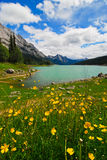 Medicine Lake. Is situated in scenic Jasper National Park, Alberta, Canada. It is a glacier-fed lake surrounded by a field of yellow wildflowers and mountain Stock Photos
