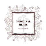 Medicine plant decorative background. Vector botanical illustration with hand drawn herbs Stock Image