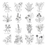 Medicine plants and herbs collection vector illustration