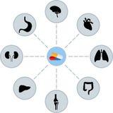 Medicine. Scheme of pills and human organs Stock Image