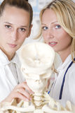 Medicine students with skeleton Royalty Free Stock Photography