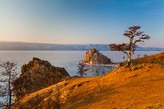 Medicinmanträd på banken av vinterBaikal sjön arkivfoto