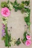 Medicinsk ört- och blommagräns Royaltyfri Bild