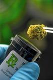 Medicinsk cannabis Fotografering för Bildbyråer
