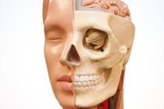 Medicinsk framsida Royaltyfri Foto
