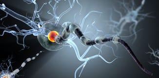 Medicinsk illustration, nervceller stock illustrationer