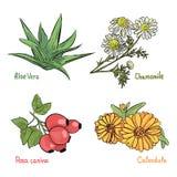 Medicinsk kosmetisk växt och örter stock illustrationer