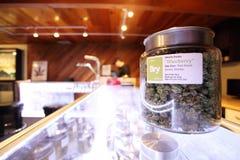 Medicinsk marijuana Royaltyfri Bild
