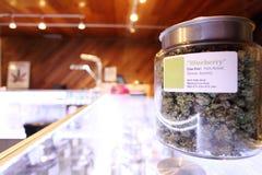 Medicinsk marijuana royaltyfri foto