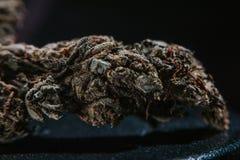 Medicinsk marijuana, cannabis, Sativa som är indica, Trichomes, THC, CBD, cancerbot, ogräs, blomma, hampa, gram, knopp Arkivbild