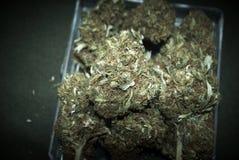 Medicinsk marijuana RX Arkivbilder