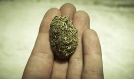 Medicinsk marijuana RX Royaltyfria Bilder