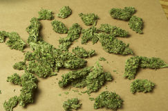 Medicinsk marijuana RX Arkivbild