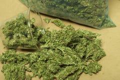 Medicinsk marijuana RX Royaltyfri Foto