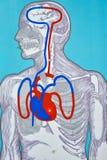 Medicinsk simulator för massage för konstgjord hjärta med indikering vektor illustrationer