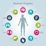 Medicinsk symbolsuppsättning för mänskliga organ med kroppen i mitt Arkivfoto