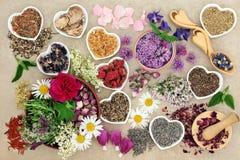 Medicinska örter och blommor Fotografering för Bildbyråer