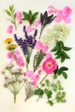 Medicinska örter och blommor Royaltyfria Bilder