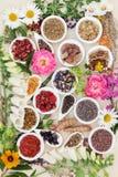 Medicinska läka örter och blommor Arkivfoton