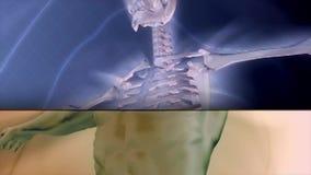 Medicinska mänskliga strålar för anatomi x vektor illustrationer