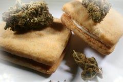 Medicinska marijuanakakor med knoppen Royaltyfri Foto