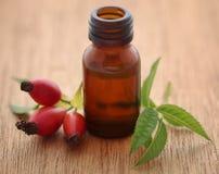 Medicinska rosa höfter med nödvändig olja royaltyfri fotografi